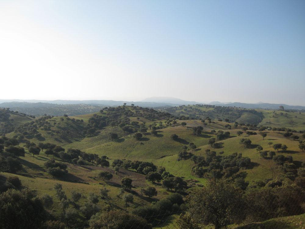 Natuurgebied Sierra de Morena Andalusië