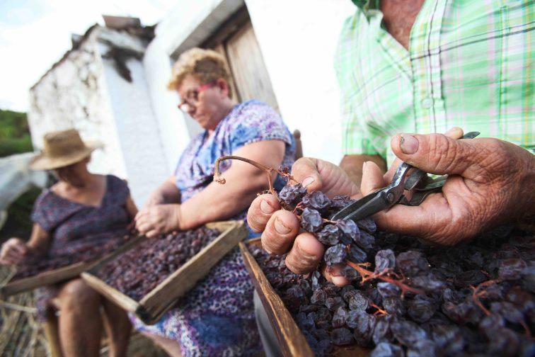 Rozijnen losknippen